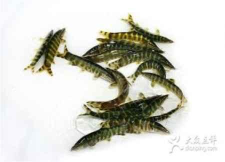 重庆野生玄鱼子餐厅