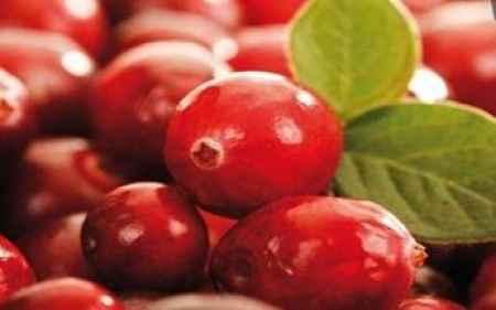 进口美国蔓越莓浓缩汁