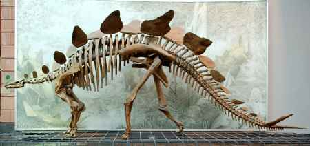 自贡恐龙骨架模型